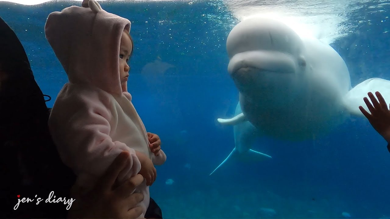 Mystic Aquarium x Beluga Whale experience in 2021 with Baby Zoe