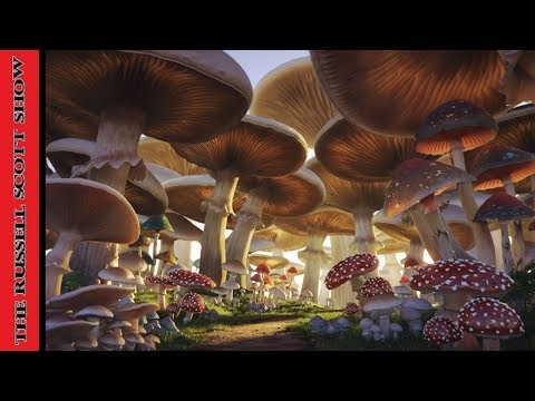 The Awesome Power of Medicinal Mushrooms w/ Robert Rogers