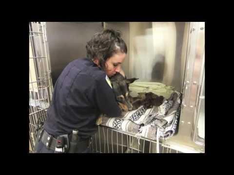 Animal Control Video 2013