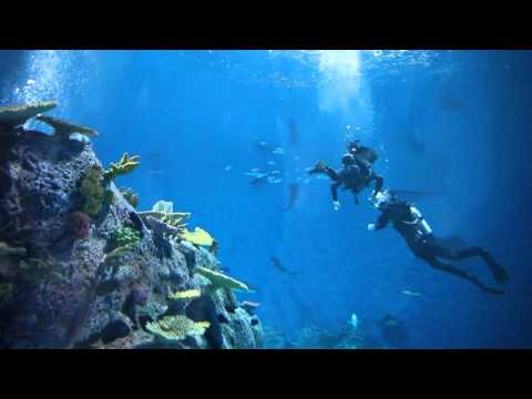 Hajdyk på Den Blå Planet