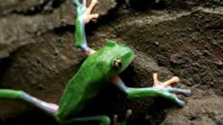 Tree Frogs & Chytrid