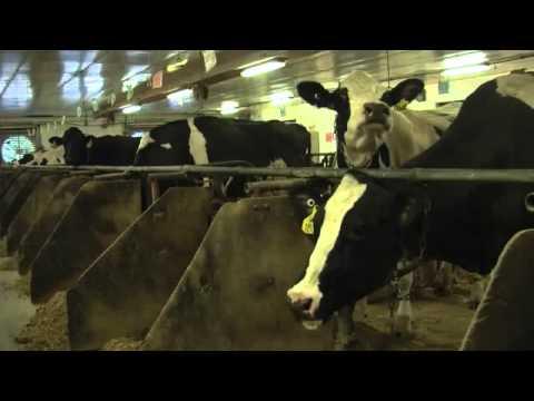 Cows & Methane