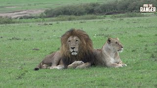 Enkoyonai Lion Pride And Lolparpit | Maasai Mara Lions