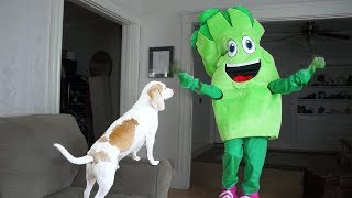 Dog Surprised by Giant Broccoli Prank: Funny Dogs Maymo & Potpie