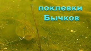 Ловля БЫЧКОВ на червя поплавочной удочкой. Рыбалка. Fishing. Ловля на поплавок