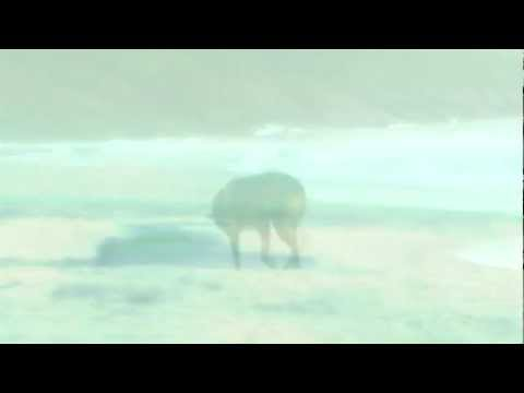 amelie-(soundtrack)---j'y-suis-jamais-alle.mp3