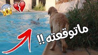 مقلب سويت نفسي غرقان بالمسبح على كلبي روكي !! شوفوا ردة فعله