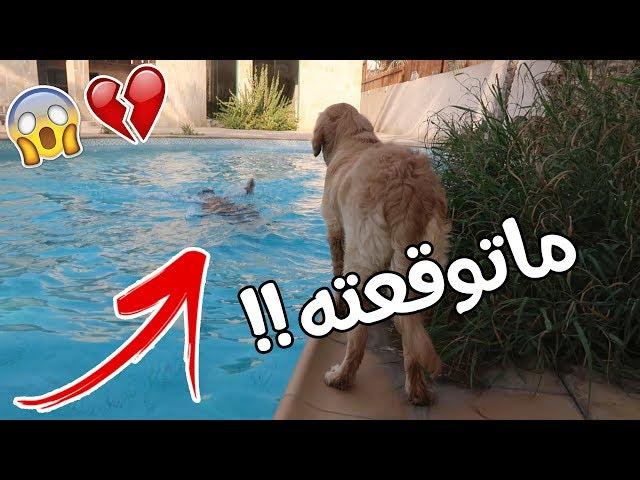 مقلب سويت نفسي غرقان بالمسبح على كلبي روكي !! شوفوا ردة فعله 💔😔