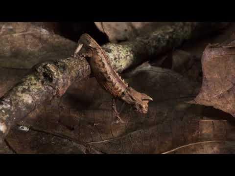 """Madagascar: Life on the Edge"" - 2018 WCFF Trailer"