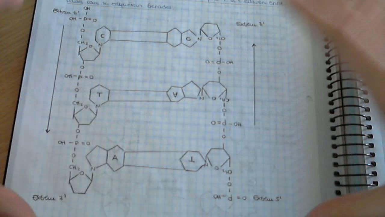 Adn Y Estructuras Del Adn Biologia ácidos Nucleicos Material Genético