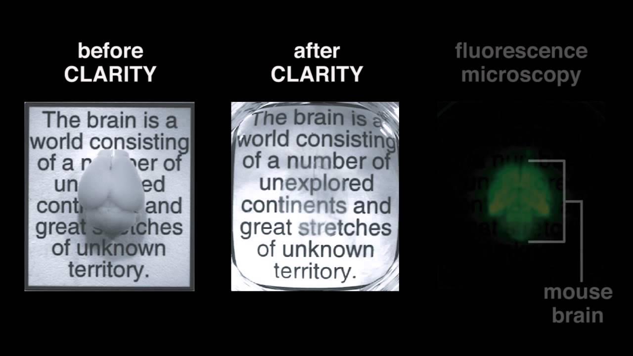 13 1 Clarity Youtube
