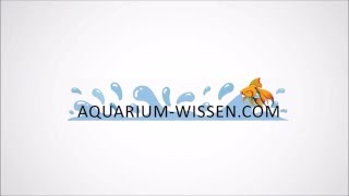 10 Das erste Aquarium – Tipps für Anfänger