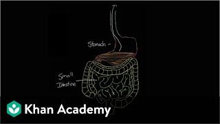 What is gastroenteritis?