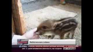 Голодные животные. Новости. GuberniaTV