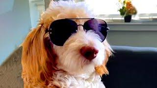Ever Seen A Sigma Dog | Funny Pet Videos