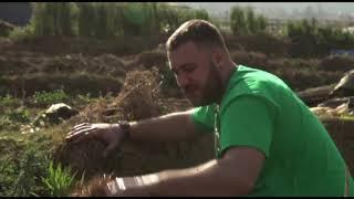Как выращивать грибы из соломы - Особенности национальной работы — 2 — Суббота, 11:45