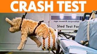 ► Dog Crash Tests
