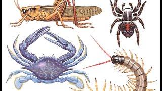 Características de los Artrópodos - Documental de Biología