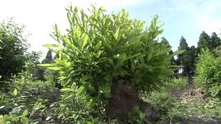 Popular Videos - Satoyama & Nature