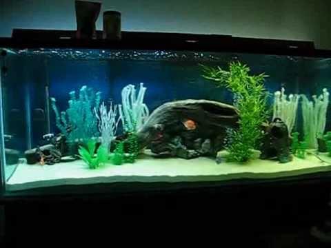 220 gallon aquarium youtube for 220 gallon fish tank