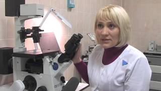 О росте заболеваемости бешенством среди животных в Орловской области