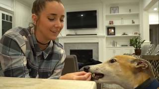 Bunny being a cute little horse for 4 minutes straight - Jenna Marbles edit
