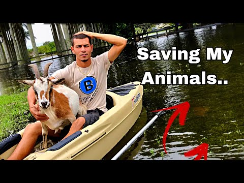 Saving my goats from... THE FLOOD!! | Blake'sExoticAnimalRanch