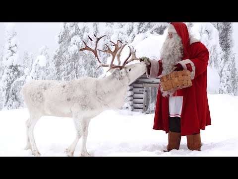 Santa Claus Reindeer Dog: Video Message To Children From Lapland: Finnish Lapphund Father Christmas