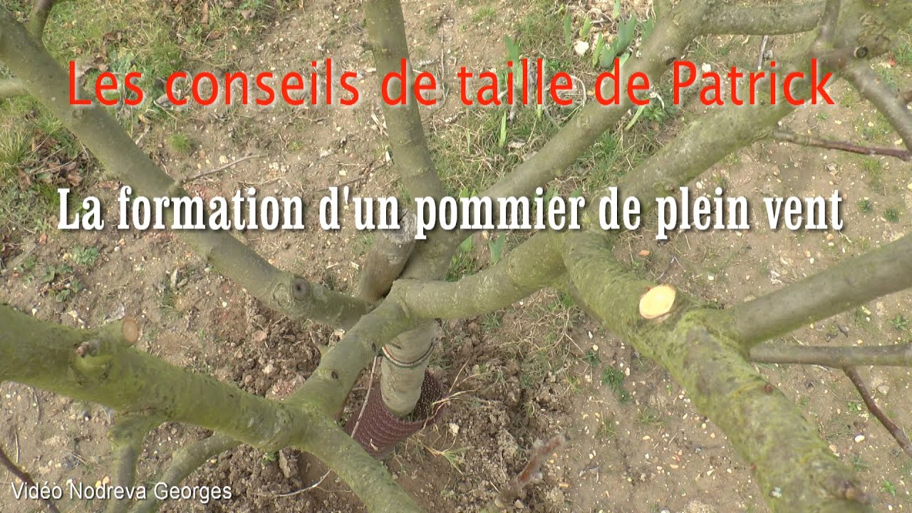 Taille de formation d 39 un pommier de plein vent youtube for Taille d un abricotier fruits