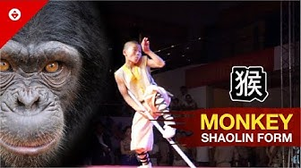 Shaolin MONKEY Form by WARRIOR Monk | BEST KUNG FU