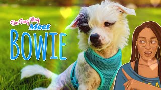 The Frog Vlog: Meet Bowie our New Chinese Crested Puppy