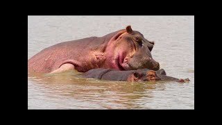 5K African Wildlife Virtual Trip to Kruger National Park in South Africa 1 5 HRS