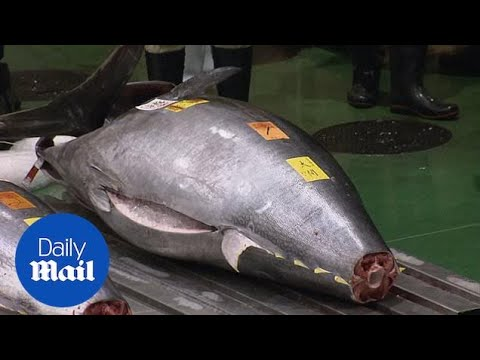 Bluefin Tuna Weighing 612lb Sells For Record £2.4 Million At Market