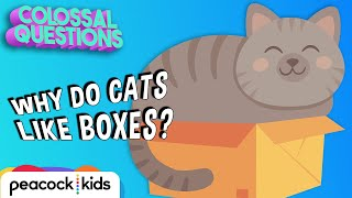 Why Do Cats Like Boxes? | COLOSSAL QUESTIONS