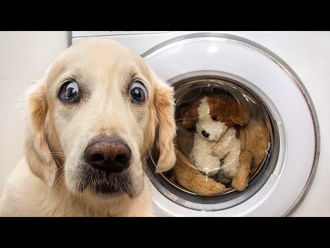 🐶 Dogs And 😹 Cats In Funniest Situations – Funny Animal Videos 😂