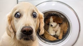Dogs And  Cats In Funniest Situations  Funny Animal Videos