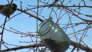 Птицы - воробьи и синицы зимой.mp4(Птичек зимой надо подкормить! Им трудно из под снега корм добыть. Летом они отблагодарят - уничтожат вредите..., 2012-02-06T12:04:15.000Z)