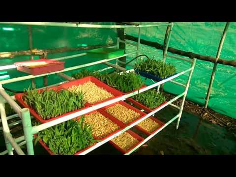 Hydroponic fodder System (Homemade)