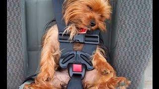 Перевозка животных. Как правильно перевозить животное в автомобиле?
