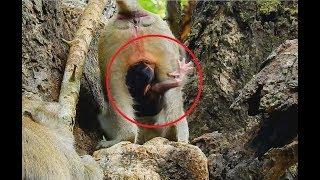 baby monkey so scare
