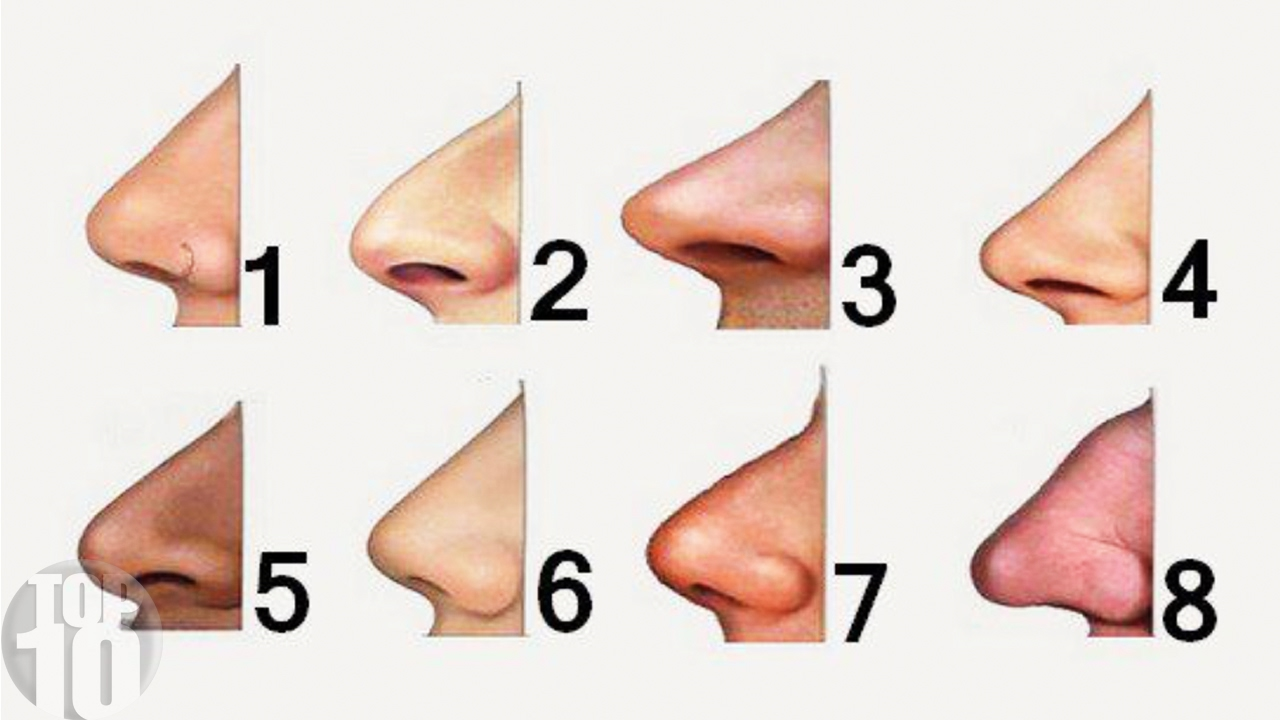 nose shapes and names - 800×450