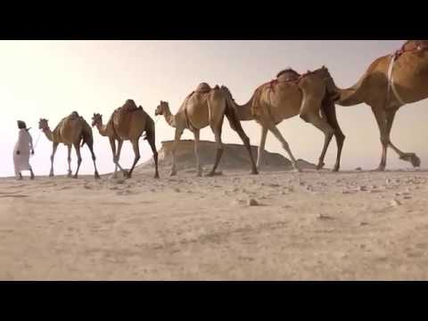 Essence of Qatar | Book with Barrhead Travel