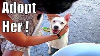 🐶FIELD TRIPS FOR SHELTER DOGS -🌴 Best Volunteer Job in Hawaii?