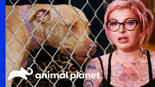 Rescuers Discover This Abandoned Pit Bull Has A Microchip   Pit Bulls & Parolees