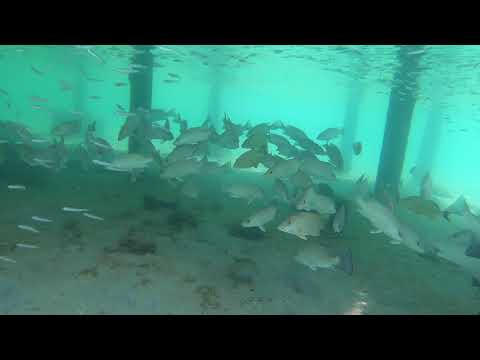 2018 Belize Secret Beach