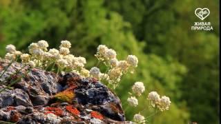 У реки Нугуш(, 2016-05-26T06:50:57.000Z)