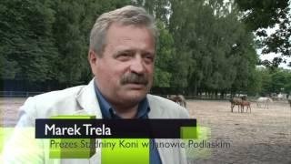 Zakończył się sezon wyźrebień w Janowie Podlaskim 2012