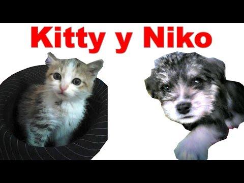 Kitty y Niko: Una gatica y un perrito muy juguetones | Tu Mascota TV