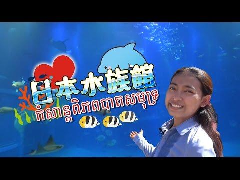 រឿងដែលភ្ញាក់ផ្ញើលនៅជប៉ុន: កំសាន្តពិភពបាតសមុទ្រ Osaka Aquarium Kaiyukan【楽しい海遊館】 ~ビックリ日本~