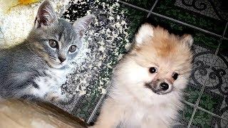 Download 3 am ПОЧЕМУ скулит щенок? Котенок Макс и первая ночь щенка Mp3 and Videos